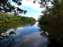 Bayard Cutting Fields Arboretum (39) (pensivelaw1) Tags: suffolkcounty newyorkstate longisland bayardcuttingarboretumstatepark
