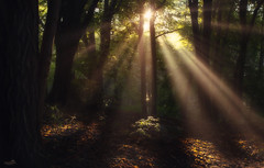 Park Pnocny (VandenBerge Photography) Tags: park parkpnocny sopot poland europe sunrays sunburst sunbeams forest travel trees thebeautyofnature canon shades nature nationalgeographic landscape light green