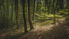 Shadows (Miguel A. Garc) Tags: nature naturaleza naturallight parquenatural hayedo nikond600 nikkorlenses nikor50mm14 girona gerona catalunya catalua spain landscape espaa