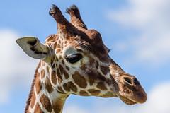 AfricaAlive-8028 (johnboy!) Tags: africa alive kessinglandwildlifepark zoo august august2006 animals