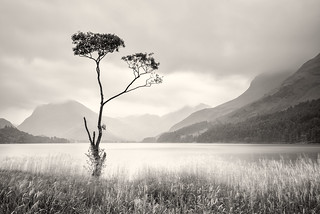 Buttermere birch in rain