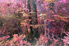 When I fall asleep (someoneandthewhale) Tags: forest pink purple magenta plants fantasy unreal road lake trail exploring adventure other planet methane