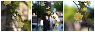 - A romance of Spring -