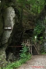 IMG_8916 (Pfluegl) Tags: niedersterreich sterreich austria lower wandern hikking hiking wanderlust natur nature autumn summer rock steine geology geologie steinwandklamm klamm gorge canyon