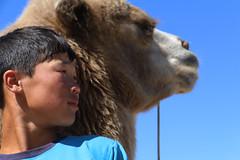 With his camel (martien van asseldonk) Tags: martienvanasseldonk mongolia camels camel