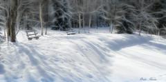 Ambiance ouate (Didier HEROUX) Tags: ouate cotton flickr 74 paysage landscape neige snow hiver winter fvrier extrieur alps alpi alpen banc balade leica panasonic raw sapin ombre prazdechamonix cham froid didierheroux herouxdidier blanc couleurs europe europa montagne mountains auvergnerhnealpes alpesdunord photography chamonix montblanc rando alpes didier heroux manteaudeneige tang photoshop cc posttraitement yahoo