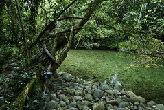 Time Standstill (creyesk) Tags: sancipriano green river colombia tree rainforest tropical