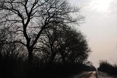 Ein Knick (Wallhecke) morgens im Gegenlicht HS8_1943 (Chironius) Tags: stapelholm bergenhusen schleswigholstein deutschland germany allemagne alemania germania   ogie pomie szlezwigholsztyn niemcy pomienie gegenlicht baum bume tree trees arbre  rbol arbres  rboles albero  rvore aa boom trd morgendmmerung morgengrauen  morgen morning dawn matin aube mattina alba ochtend dageraad  amanecer schnee silhouette