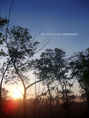 good morning tree (doglaz coffee) Tags: sky sun landscape nikon s3000