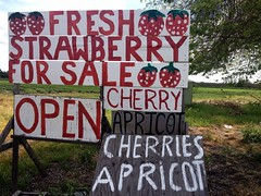 Farmer Font (misterbigidea) Tags: wood signs green art sign fruit season cherry landscape happy countryside stand artwork strawberry open handmade letters orchard fresh business handpainted font type apricot produce lettering roadside stockton signpainter