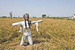 Scarecrow (Shubh M Singh) Tags: light portrait india sunglasses dark fun glasses village mask top wheat scarecrow shades jeans wig farmer handbag haryana baisakhi ambala shahbad markanda dinarpur