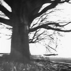 Reverb (Salva G.) Tags: bw white black tree 120 film blanco analog square lomo lomography y negro double bn lubitel medium format pelicula 100 universal asa blanc medio negre analogica exposicion 120mm doble analogic formato 166 exposici expossure mitj pellicula