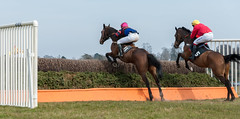 Point to Point (artgriffo) Tags: horses jockeys bookies silks godstone pointopoint