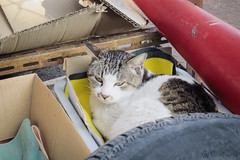 Today's Cat@2013-04-13 (masatsu) Tags: cat canon catspotting thebiggestgroupwithonlycats powershots95