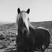 #199/365 Cavallo