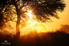 The Sunrise Ruby (Muhammad Fahad Raza) Tags:
