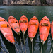 Kayak for rent