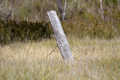 Remembrance of times past (mgjefferies) Tags: park fence post australia queensland girraween mgjefferies