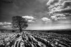 Lone tree, Malham limestone pavement (Nigel Blake, 13 MILLION...Yay! Many thanks!) Tags: uk england tree canon eos angle pavement yorkshire wide limestone lone lanscape dales malham 2035mm yorkshiredalesnationalpark 1dsmkiii nigelblake nigelblakephotography