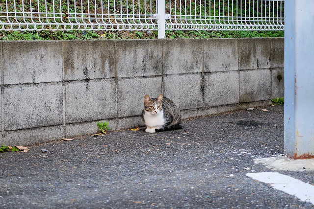 Today's Cat@2014-10-29