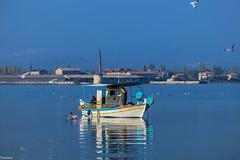 (Siminis) Tags: blue seagulls seascape reflections fishing fishermen seagull aegean sealife greece serene fishingboat seashore gera mytilene aegeansea boatreflections gulfofgera siminis