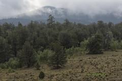 Foggy Morning Sunrise Aug 2016 (wfgphoto) Tags: camping colorado mountains fog cold humid