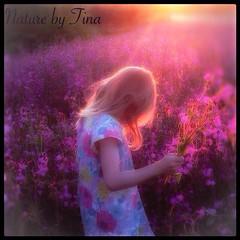 Girl in the sunset (NaturebyTina) Tags: sunsetphotography sunsetphoto flowerphotography photo field natur life love flowerlovers nature pige pink wildflowers flowers sunset girl