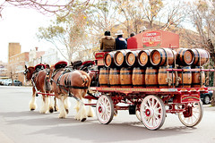 IMG_7221 (Click. Boom.) Tags: horse horses drafthorses clydesdales carton beer brewery horseandcart driving
