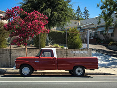 Driver Wanted (Maureen Bond) Tags: crapemyrtle tree truck street parked pink red ford classic vintage wishitwasmytruck pretty ca maureenbond foothills