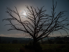 (schulze31) Tags: tree baum sunset nikon d800