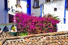 87 - Obidos toits et jardins (paspog) Tags: obidos portugal toits roofs tuiles tiles decken villagemdival medievalvillage