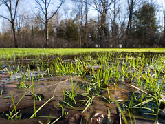 Flooded (Jason Crouse) Tags: 2014 camera em1 henespark landscape mzuiko1240f28 mi menominee michigan miscellaneous nature olympus park subject water zuiko unitedstates