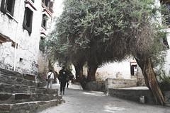 IMG_0127 (chungkwan) Tags: shigatse tibet canon sigma photography travel world nature