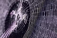 G = glittering HMM (Gi.Vanella) Tags: spinnennetz macro spiderweb bokeh canon tautropfen morningdew glnzend sparkling macromonday gglittering