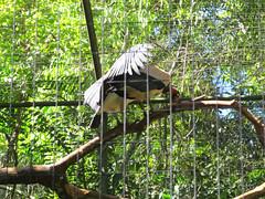 "Le Parc des Oiseaux d'Iguaçu <a style=""margin-left:10px; font-size:0.8em;"" href=""http://www.flickr.com/photos/127723101@N04/29532003512/"" target=""_blank"">@flickr</a>"