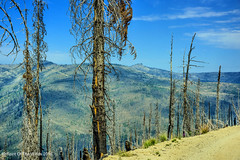 The Magruder Corridor (jimgspokane) Tags: magrudercorridor idahostate mountains mountainroads camping trees forestfires nikonflickraward otw