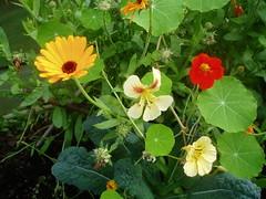 P1010013 (ianharrywebb) Tags: edinburgh iansdigitalphotos flowers flower royalbotanicgardens