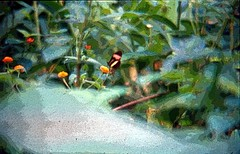 Borboleta desfocada - variao artstica (Luciano Felipe) Tags: animal inseto borboleta digitalizada