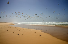 in libert (mat56.) Tags: ocean sea beach birds landscapes sand mare flight uccelli volo senegal dakar paesaggi spiaggia oceano sabbia atlantico mat56 potd:country=it