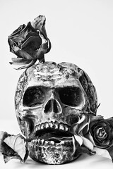 Still dead (rikhard.kuutti) Tags: roses portrait blackandwhite stilllife rose tooth mouth dead skull petals teeth highcontrast wither petal withered dying hold sigmaaf70300mmf456apodgmacro