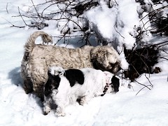 Hunde (bratispixl) Tags: germany licht oberbayern schatten hunde farben interesse chiemgau lichtwechsel traunreut stadtrundweg geinsam bratispixl belichtungsproben