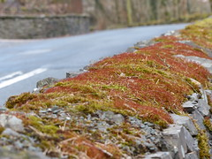 Moss (FloraandFauna_2) Tags: lake wall moss district drystone