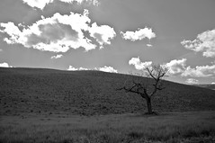 Solo (tommimarc) Tags: bw panorama white black tree landscape country natura campagna ill colline solitudine d90 tommimarc