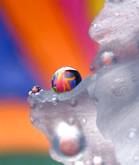 By now you must know I am easily amused... (Kaos2) Tags: iris macro rainbow waterdrop popart refraction kaos2