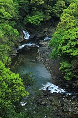 Sing of Stream in the Valley ~ Tonghou Valley ~ (PS~~) Tags: county new wood city travel trees fern green nature creek forest canon river landscape photography spring bath scenery stream exposure gallery natural snake taiwan lindau vert taipei      wulai taipeicity xindian   yuxi               a    tonghou    nanshih    gainuwai