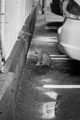 Today's Cat@2013-04-24 (masatsu) Tags: bw cat canon catspotting thebiggestgroupwithonlycats powershots95