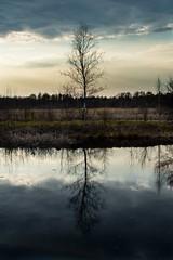 (Miazga82) Tags: sunset lake reflection tree water poland swamp