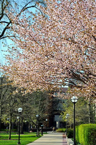 Spring in the Diag