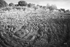 La tierra (Colore-arte) Tags: trees bw naturaleza nature field canon arboles ps bn campo tierra