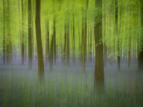 Purple haze by antgirl, on Flickr